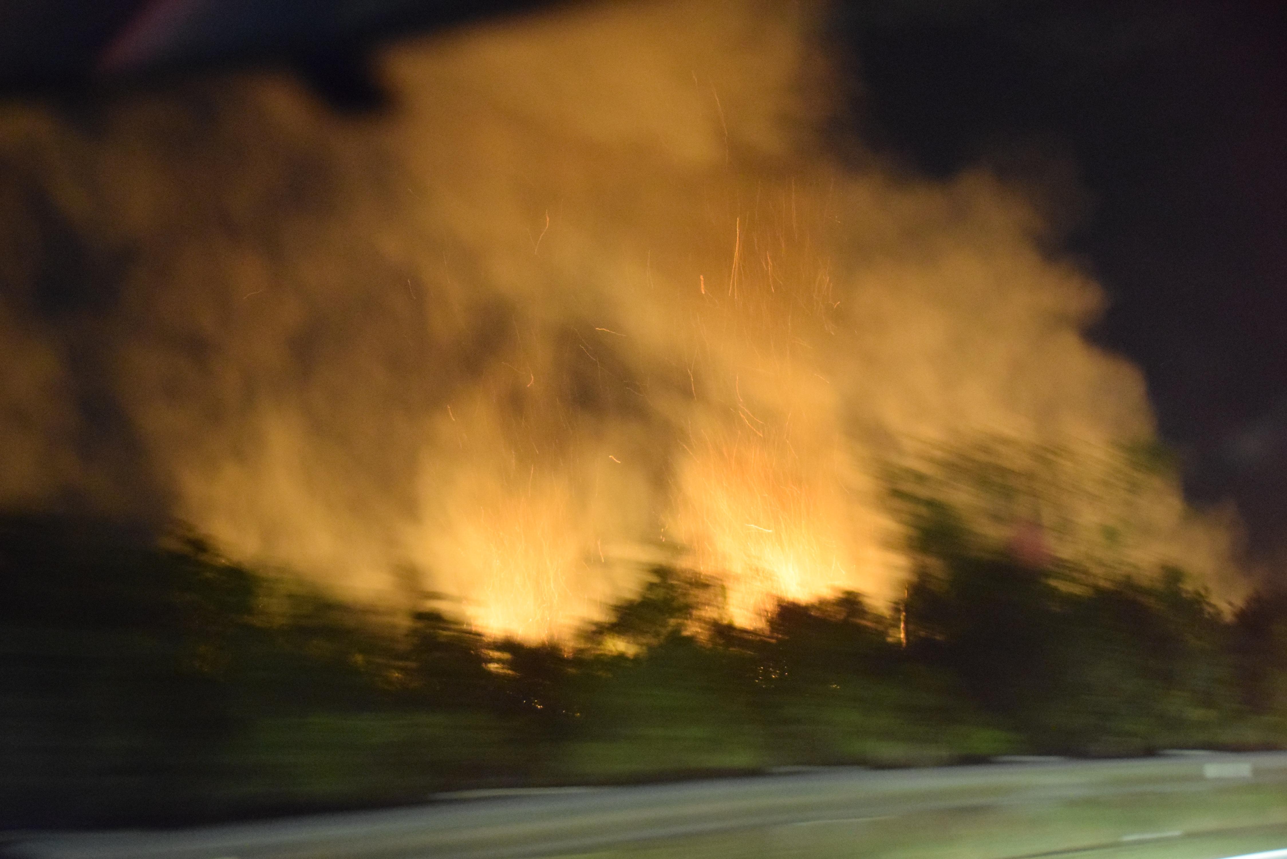 Metsäpaloa